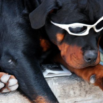 dog-glasses-wink-optometry